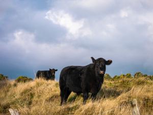 grass-fed beef and regenerative grazing techniques