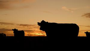 regenerative farming and carbon sequestering